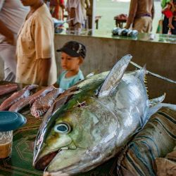 Banda Islands yellow-fin tuna