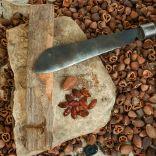 Banda Islands kenari nuts