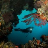 Diving in Hatta - Banda islands